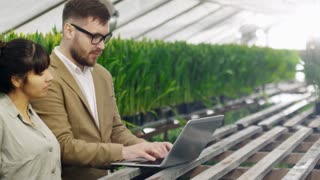 PAN of businessman in glasses choosing flowers in wholesale greenhouse: he typing on laptop and discussing which plants to buy with female gardener