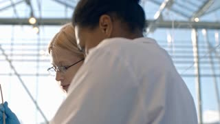 PAN of concentrated blond woman in lab coat and glasses holding test tube with soil sample and green seedling and discussing it with female African agronomist typing on tablet