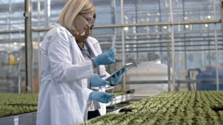PAN of female crop researcher in lab coat standing in before seedlings growing in industrial greenhouse and putting soil samples into test tube while her African colleague typing on tablet