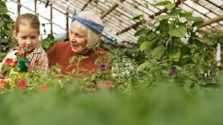 PAN of happy elderly woman with grey hair laughing and talking with playful little granddaughter helping her spray fertilizer on plants and flowers growing in greenhouse