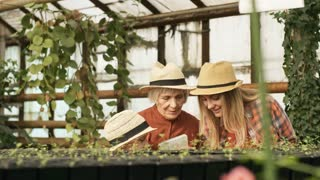 PAN of little girl, young woman and her senior mother wearing straw hats gardening in greenhouse with climbing plants and seedling growing in pots