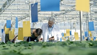 PAN of senior agronomist talking with young male commercial greenhouse worker in overalls inspecting plants while blond female agronomist making notes on clipboard