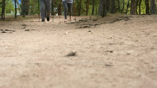 PAN with low-sections of legs of unrecognizable elderly people with trekking poles walking on path in forest