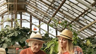 Tilt down of cheerful young woman and her senior mother inspecting potted seedlings standing on table in greenhouse as curious little girl looking at plants with curiosity