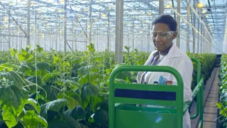 Tilt down of female African agronomist wearing lab coat and safety goggles operating pipe rail trolley between rows of cucumber plants