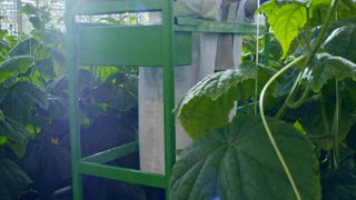 Tilt up of female African crop researcher in safety goggles and lab coat standing on pipe rail trolley and writing something on clipboard while inspecting cucumber plants in industrial greenhouse