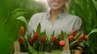 Tilt up of happy female gardener holding wooden box with cut red tulips and smiling for camera while standing between green stems of flowers growing in raised beds