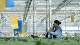 Tracking with side view of tired female African worker in overalls pushing cart and walking through greenhouse nursery with rows of plants