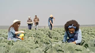 Young bearded field supervisor walking through rows of cabbages and talking to worker carrying harvest as young women weeding and foliar feeding plants