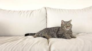Cat relaxing on white sofa in living room