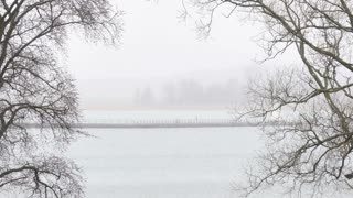 Fog and lake. Misty morning with tree branches and water.