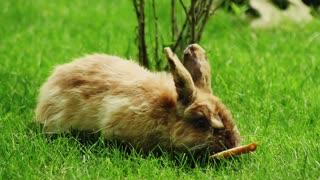bunny eats bread on meadow