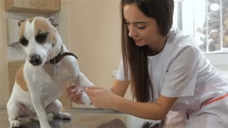 Attractive female vet doctor bandaging dog's leg. Pretty female veterinarian healing dog's leg. Young caucasian woman in white coat smiling for the camera with bandage in her hand