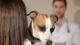 Dog opening its mouth on the shoulder of it's female owner. Close up of nice dog looking into the camera while it's female owner holding it on her shoulder. Male vet doctor writing on his clipboard on