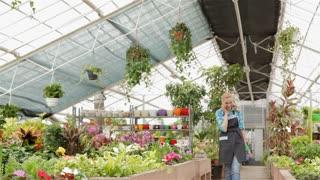Female florist walks between flowerbeds at the garden centre
