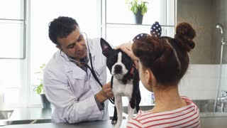Mature handsome male professional vet using stethoscope examining adorable puppy of a little girl working at the clinic medicine healthy canine animals pets love appointment profession.