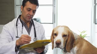 Mature male professional vet writing medical prescriptions after examining adorable Beagle puppy at his clinic animals pets care healthy happy dogs canine profession doctor occupation job.
