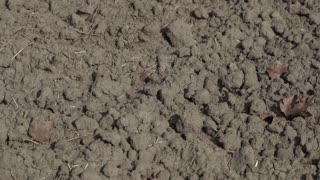 Barren and drought land