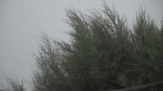 Summer storm, rain and wind blowing on trees