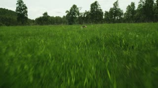 Man Lying in the Grass. Aerial footage