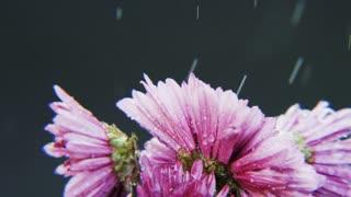Purple Flowers Rotating in Heavy Rain