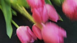 Purple Tulips Falling Down
