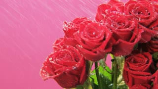 Red Roses Rotating in Heavy Rain