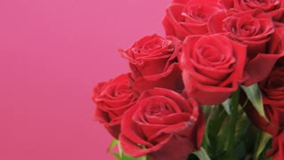 Red Roses Rotating on Pink Background
