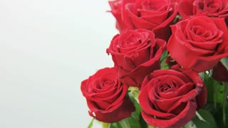 Red Roses Rotating on White Background