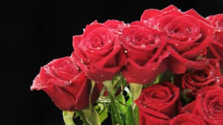 Wet Red Roses Rotating