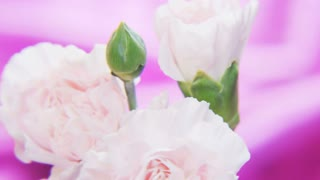 White Roses Rotating on a Deep Purple Background