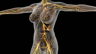 science anatomy of human body in x-ray with glow blood vessels. alpha channel