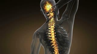 backbone. backache. science anatomy scan of human spine bones glowing with yellow