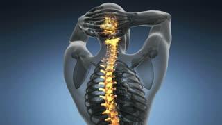 backbone. backache. science anatomy scan of human spine bones glowing