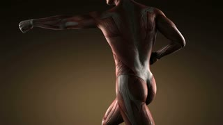 human muscular system scan