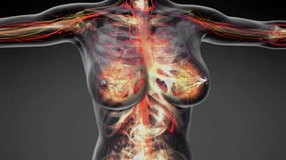 loop science anatomy of human body in x-ray with all colored organs in gray