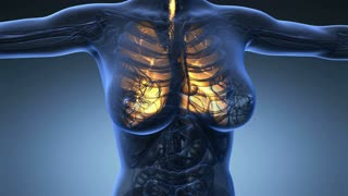 loop science anatomy of human body in x-ray with glow lungs