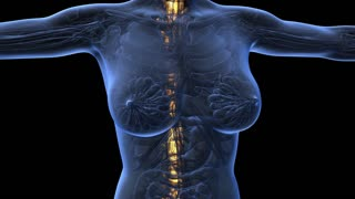 loop science anatomy of human body in x-ray with glow spine bones on blue. alpha channel
