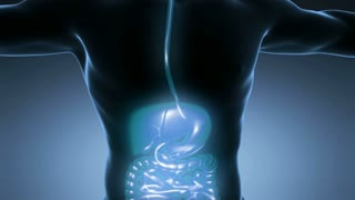 loop science anatomy of man body with glow digestive system on blue