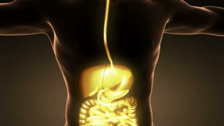 loop science anatomy of man body with glow digestive system
