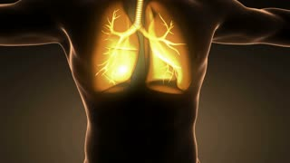 loop science anatomy of man body with glow lungs