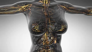 loop science anatomy scan of woman limphatic system glowing with yellow