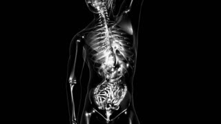 Loop Science Anatomy Tomography Scan Of Human Body