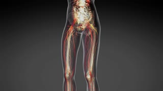science anatomy of human body in x-ray with all colored organs in gray