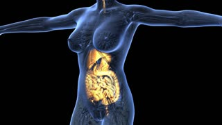 science anatomy of human body in x-ray with glow digestive system on blue. alpha channel