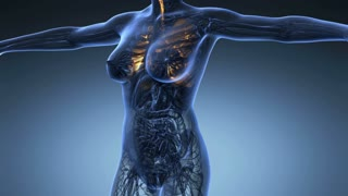 science anatomy of human body in x-ray with glow lungs on blue background
