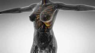science anatomy of human body in x-ray with glow lungs