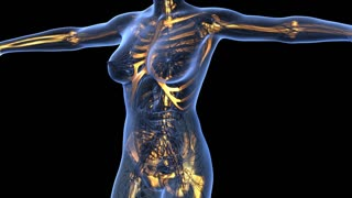 science anatomy of human body in x-ray with glow skeleton bones on blue. alpha channel