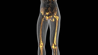science anatomy of human body in x-ray with glow skeleton bones on white. alpha channel