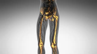 science anatomy of human body in x-ray with glow skeleton bones on white